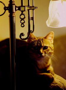 cat picture dramatic lighting