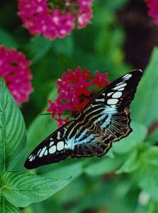 butterfly in soft light