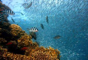 photo example of underwater fish